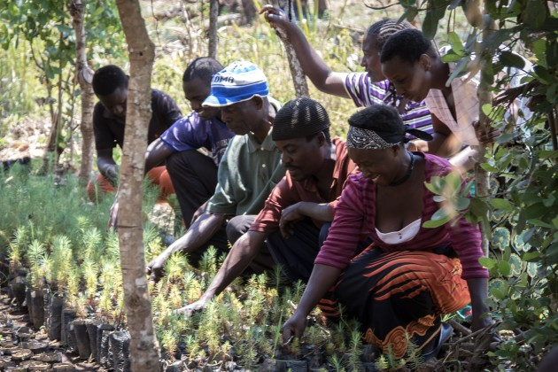 temwa-tree planting-4